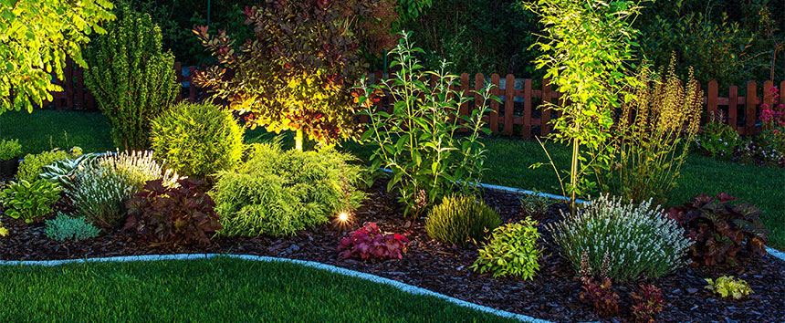 Garden With Landscape Lighting